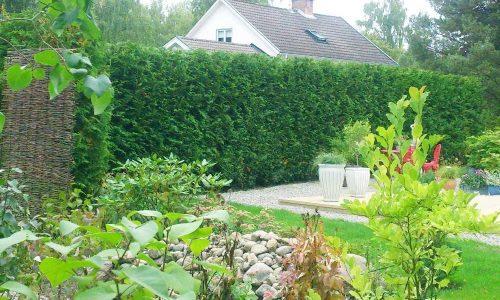 Trädgårdsskötsel Räppe GRöna RUm .